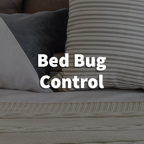 Bed Bug Pest Control in Taylors, South Carolina