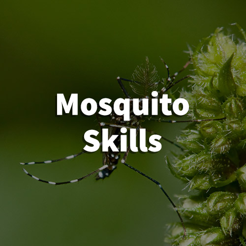 Mosquito Pest Control in Taylors, South Carolina