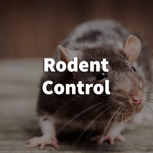 Rodent Pest Control in Taylors, South Carolina