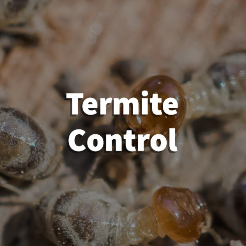 Termite Pest Control in Taylors, South Carolina