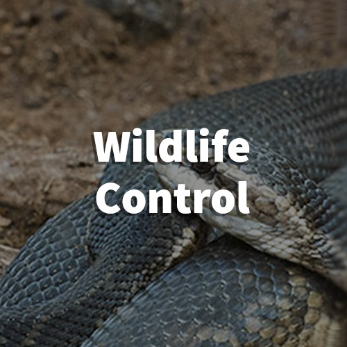 Wildlife Pest Control in Taylors, South Carolina