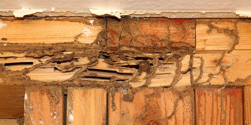 Termite damaged wood in home